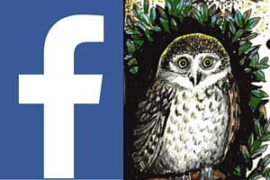 FACEBOOK icon for re-wild yourselg nature connection retreats and events